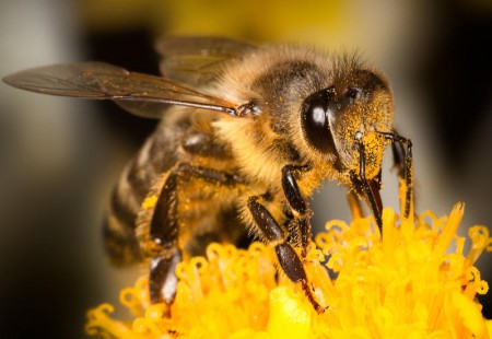 бджола - ГОЛОС || почути правду!